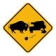 Bison Crash
